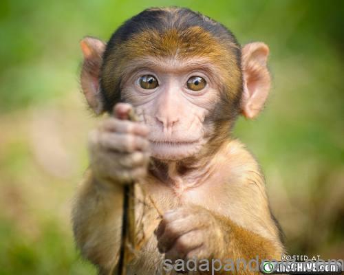 58+ Gambar-gambar Binatang Yang Lucu HD